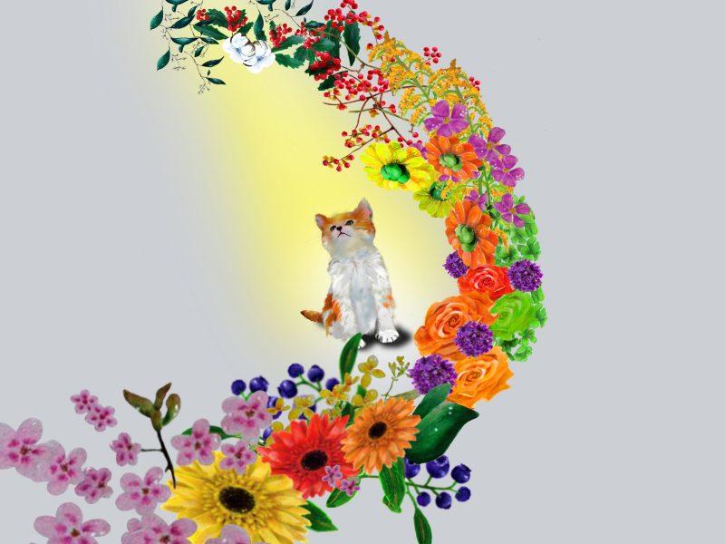 天国の愛猫と繋がる